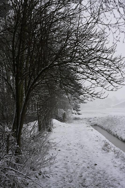 winter snow tracks
